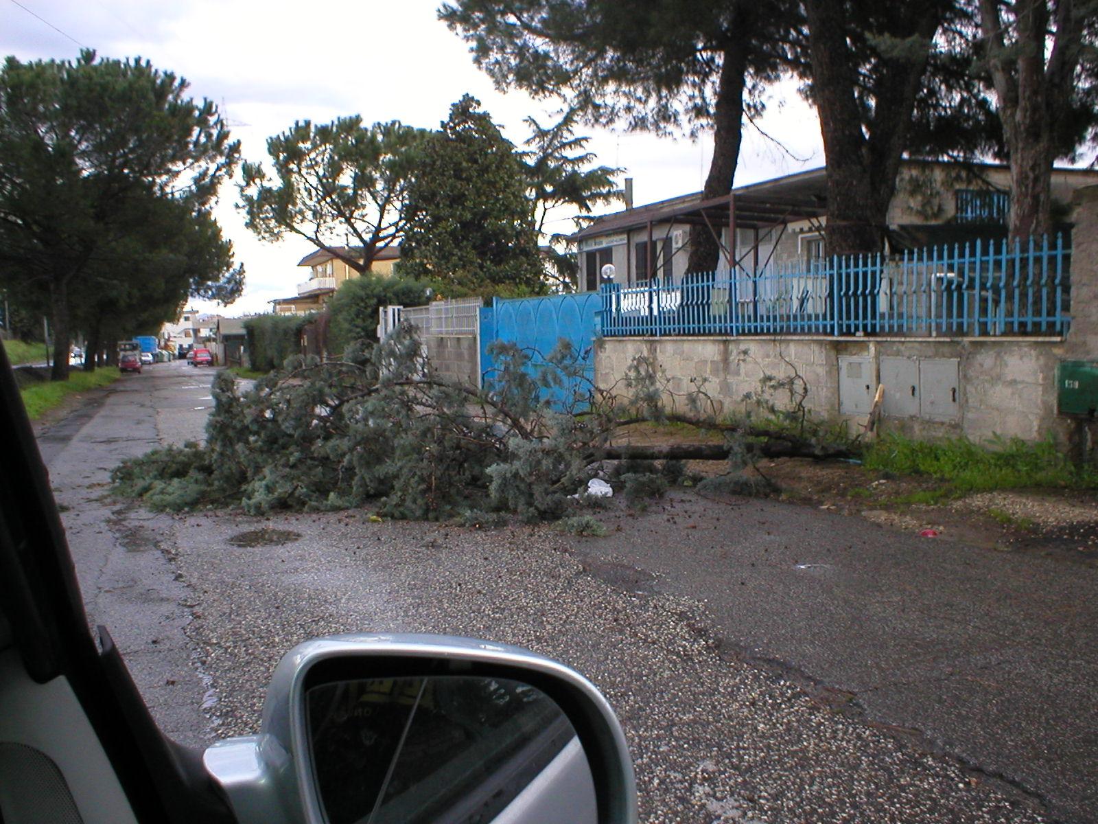 Albero caduto per strada a rocca cencia